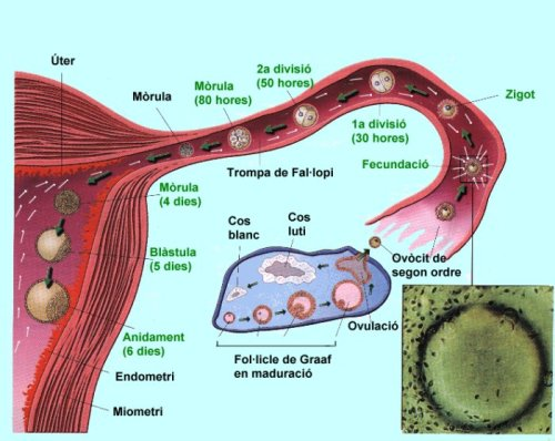 """(Imatge basada en un dibuix d'AMADEU BLASCO pel llibre """"Biologia i Geologia"""" de 3r d'ESO. Editorial Casals. 2002)"""