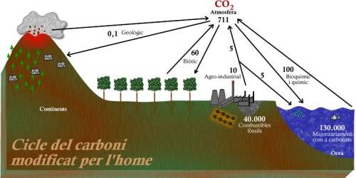 El cicle del carboni modificat per l'acció de l'home