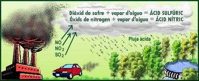 plujaacica