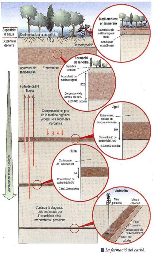Formació del tipus de carbó. http://www.xtec.cat/iesfortpius/depart/energetico.htm