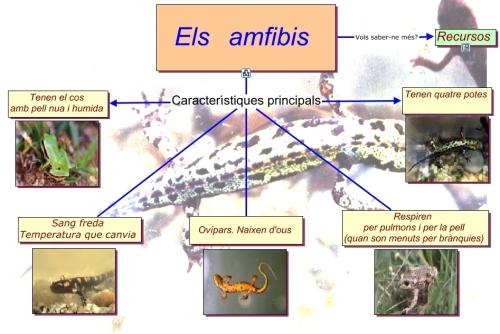 esquemaamfibis