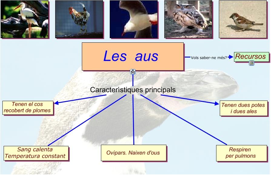 Els ocell:s morfologia externa, anatomia interna, reproducció