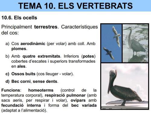 http://dl.dropboxusercontent.com/u/22048056/CCNN1RESO/UD10/UD.10.Vertebrats.pdf