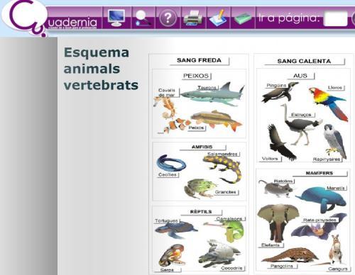 http://primaria.ieduca.caib.es/images/stories/recursos/activitats/invertebrats/index.html