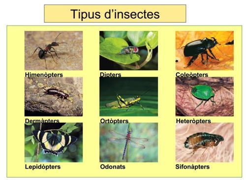 IES Josep Font i Tries - Ciències Naturals
