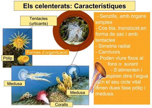 Els animals invertebrats: IES Josep Font i Trias – Ciències Naturals