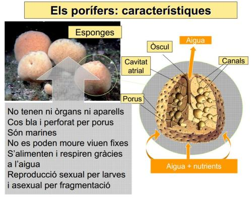 IES Josep Font Tries – Ciències Naturals