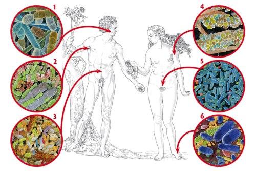 Una persona adulta pot tenir deu vegades més cèl·lules microbianes que humanes: el cos humà té deu bilions de cèl·lules eucariotes, les «nostres», i cent bilions de cèl·lules procariotes. El cos humà ofereix una gran diversitat d'hàbitats: 1) Microbiota de la boca. 2) Microbiota de l'aixella. 3) Microbiota de l'intestí. 4) Microbiota de la pell. 5) Microbiota de la vagina (la majoria són lactobacils; hi ha molt poca diversitat). 6) Microbiota del peu, entre els dits.