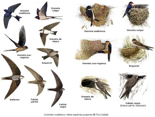migració d'ocells