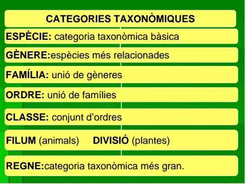 Categories taxonòmiques IES Josep Font i Tries
