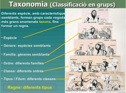 Taxonomia (classificació en grups) http://www.slideshare.net/jisanta/diversitat-11566446