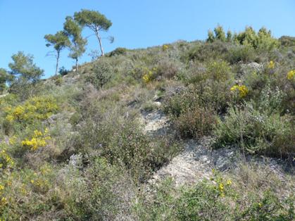 Vegetació de la brolla