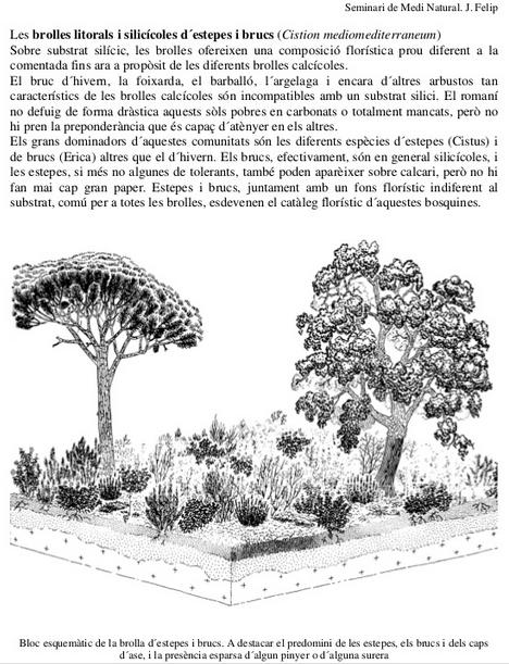 Vegetació de brolla