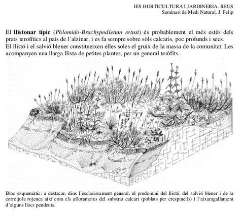 Vegetació de prat o herbassar