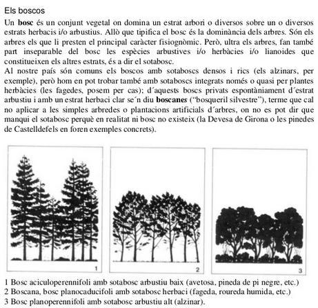 Vegetació de bosc