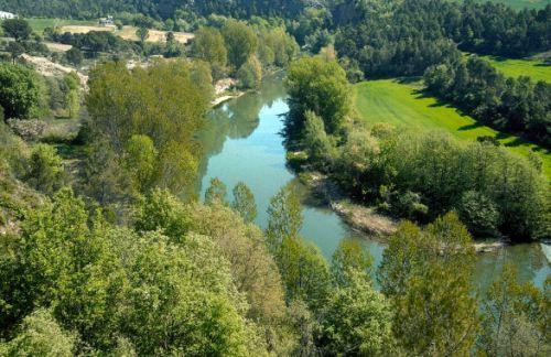 Bosc de ribera