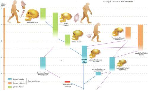 Evolució humana