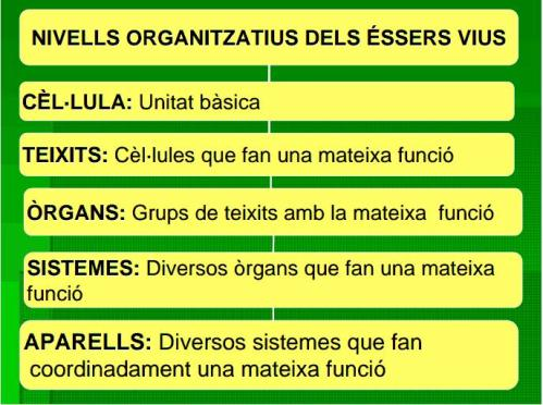 IES Josep Font i Trias
