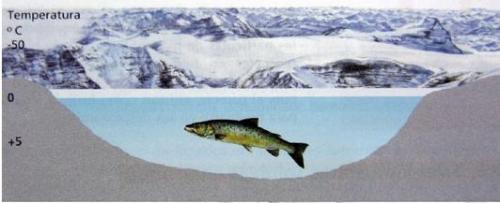 El gel regula la temperatura de l'aigua que hi ha per davall d'ell