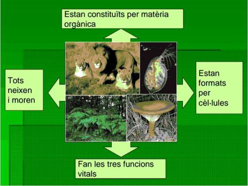 IES Josep Font Tries