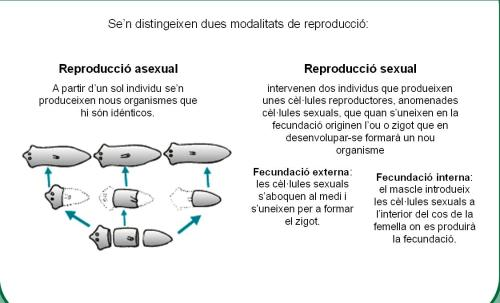 1r ESO - Ciències de la Natura - ECIR