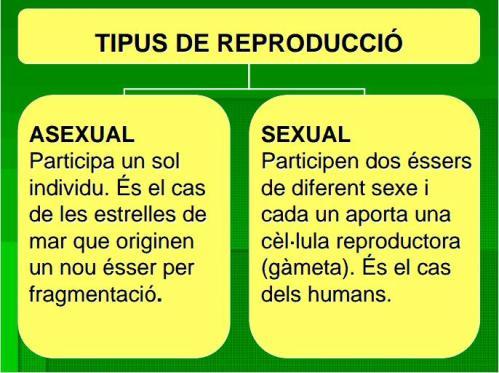 IES Josep Font i Tries